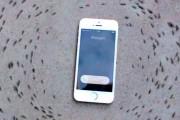 Παράξενη συμπεριφορά μυρμηγκιών γύρω από ένα iPhone