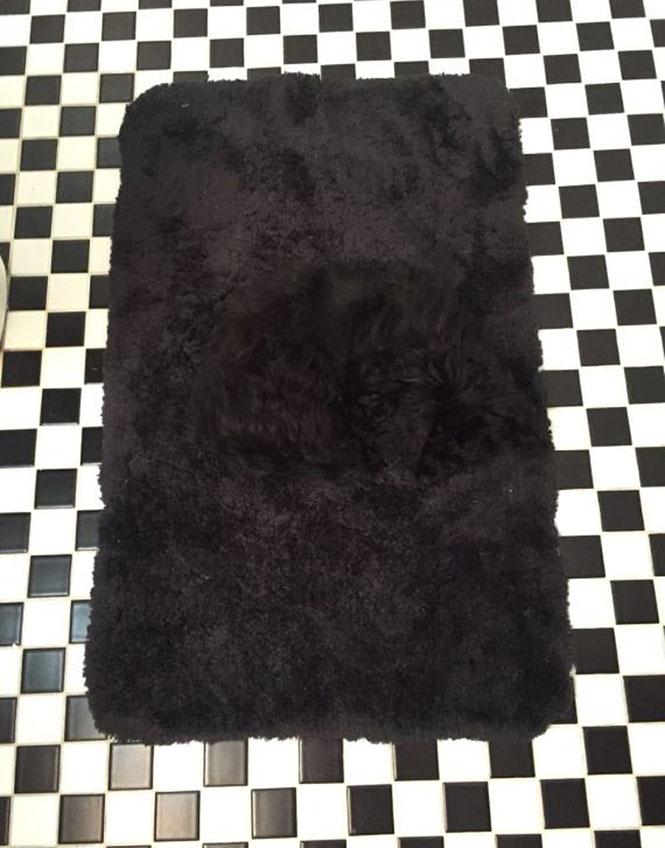 Τι κρύβεται στο μαύρο χαλάκι; | Φωτογραφία της ημέρας