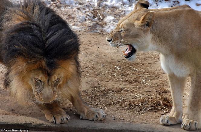 Ούτε ο βασιλιάς δεν γλιτώνει από την γκρίνια | Φωτογραφία της ημέρας