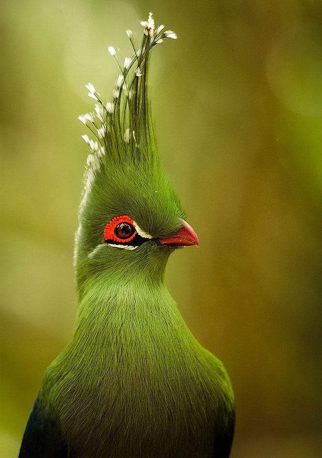 Εξωτικό πουλί με μεγαλοπρεπές λοφίο | Φωτογραφία της ημέρας