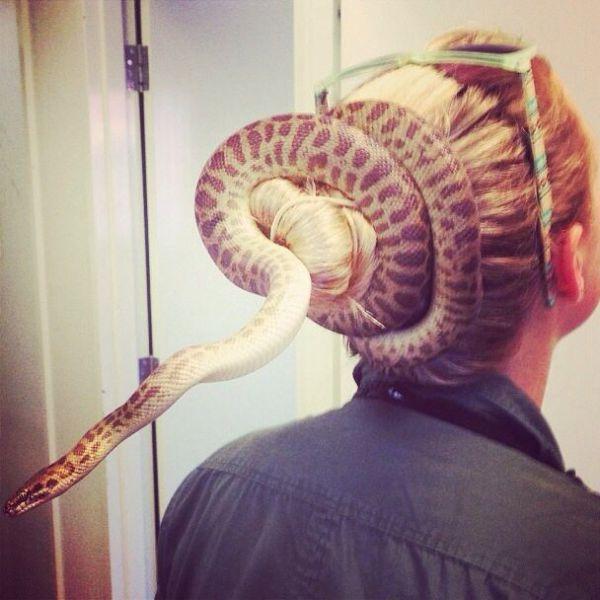 Ούτε φίδι στον... κότσο σου | Φωτογραφία της ημέρας