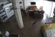 Δείτε πως αυτή η γάτα έκανε τον σκύλο να σταματήσει το γάβγισμα