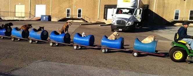 Σκύλοι σε τρενάκι (2)