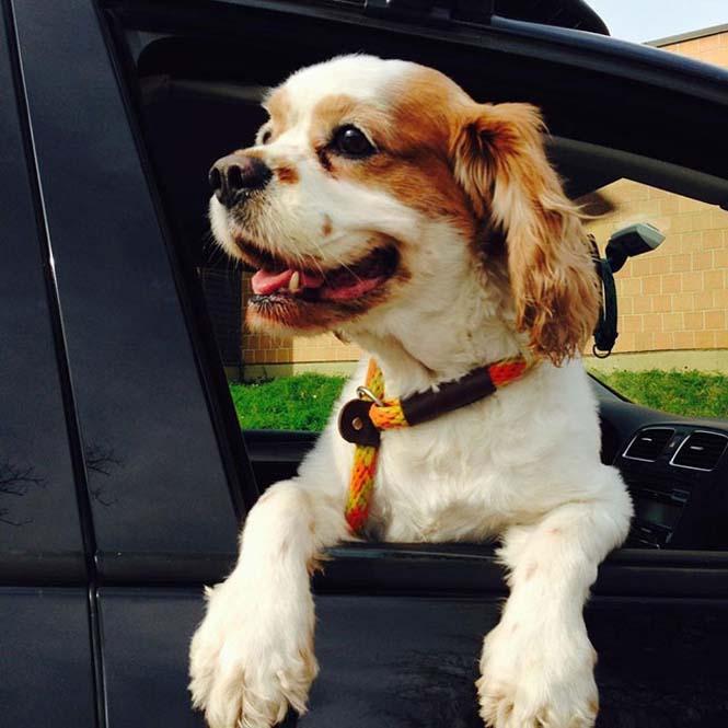 Σκύλοι στο αυτοκίνητο λίγο μετά την υιοθεσία τους #2 (3)