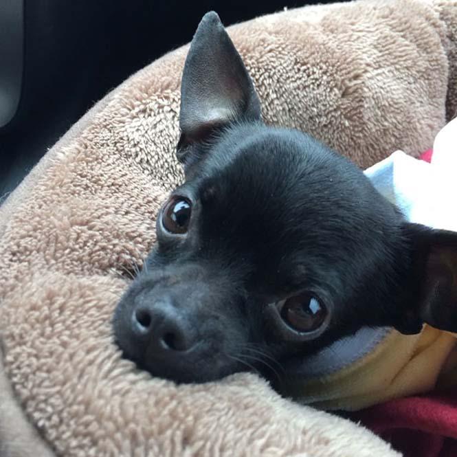Σκύλοι στο αυτοκίνητο λίγο μετά την υιοθεσία τους #2 (4)