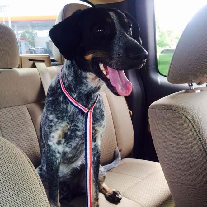 Σκύλοι στο αυτοκίνητο λίγο μετά την υιοθεσία τους #2 (20)