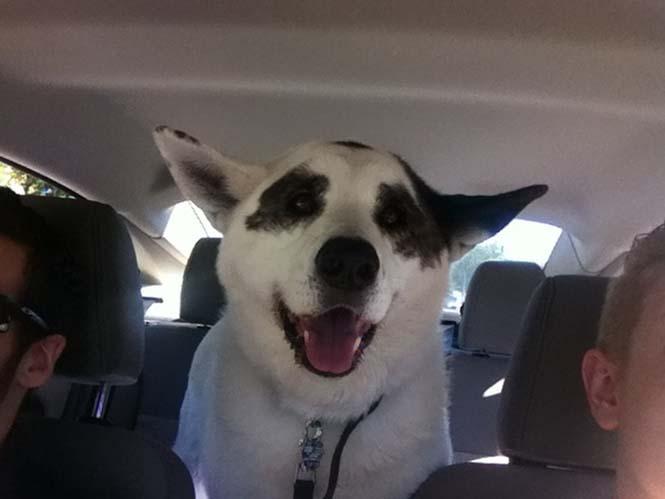 Σκύλοι στο αυτοκίνητο λίγο μετά την υιοθεσία τους #2 (21)