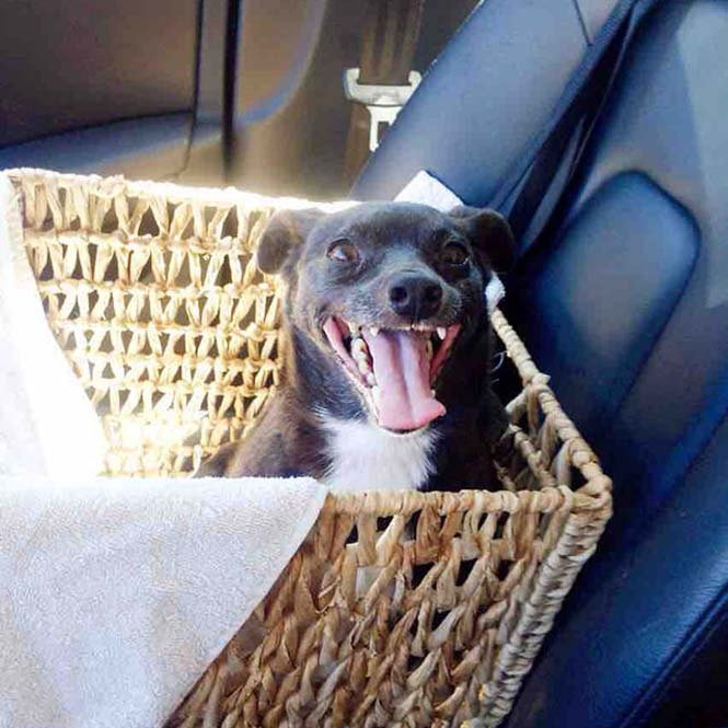 Σκύλοι στο αυτοκίνητο λίγο μετά την υιοθεσία τους #2 (26)
