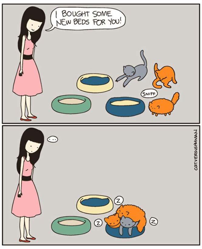 Χιουμοριστικά κόμικς δείχνουν πως είναι να έχεις γάτα (3)