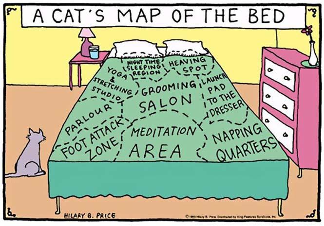 Χιουμοριστικά κόμικς δείχνουν πως είναι να έχεις γάτα (20)