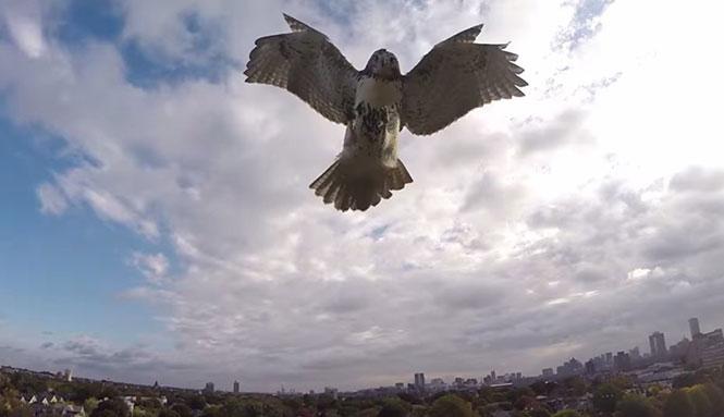 Ζώα που δεν τα πάνε καθόλου καλά με τα drones