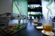 Cafe με φίδια στο Τόκιο (1)