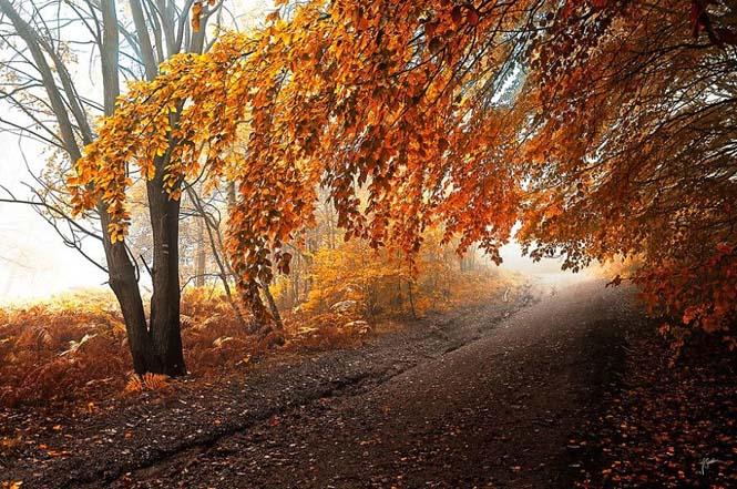 20 εκπληκτικές φωτογραφίες φθινοπωρινών δασών από τον Janek Sedlar (1)