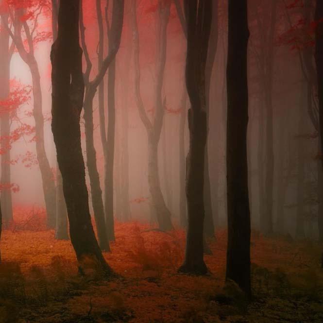 20 εκπληκτικές φωτογραφίες φθινοπωρινών δασών από τον Janek Sedlar (2)