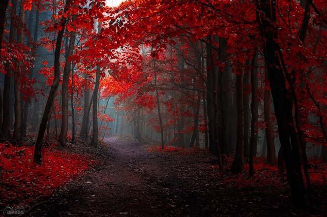 20 εκπληκτικές φωτογραφίες φθινοπωρινών δασών από τον Janek Sedlar (3)