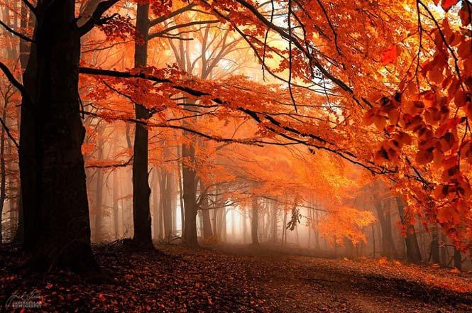 20 εκπληκτικές φωτογραφίες φθινοπωρινών δασών από τον Janek Sedlar (4)