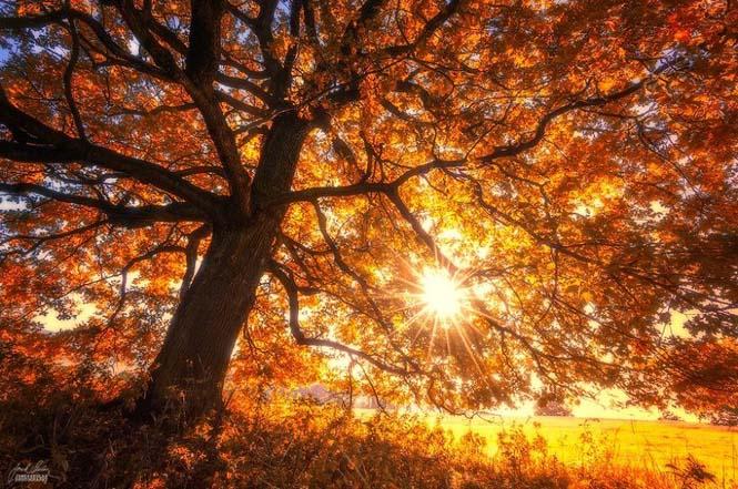20 εκπληκτικές φωτογραφίες φθινοπωρινών δασών από τον Janek Sedlar (5)