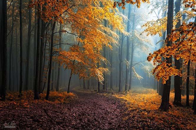 20 εκπληκτικές φωτογραφίες φθινοπωρινών δασών από τον Janek Sedlar (6)