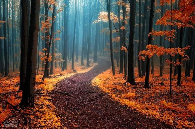 20 εκπληκτικές φωτογραφίες φθινοπωρινών δασών από τον Janek Sedlar (7)