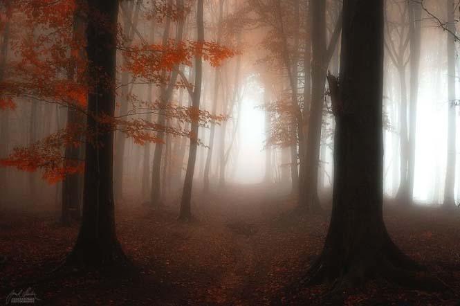 20 εκπληκτικές φωτογραφίες φθινοπωρινών δασών από τον Janek Sedlar (8)