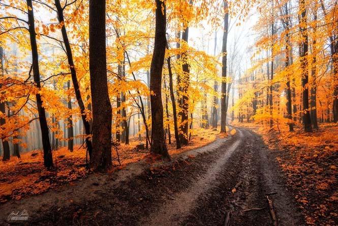 20 εκπληκτικές φωτογραφίες φθινοπωρινών δασών από τον Janek Sedlar (9)