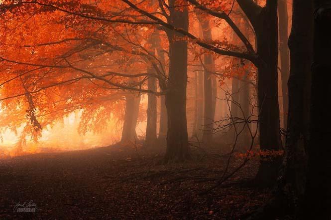 20 εκπληκτικές φωτογραφίες φθινοπωρινών δασών από τον Janek Sedlar (10)