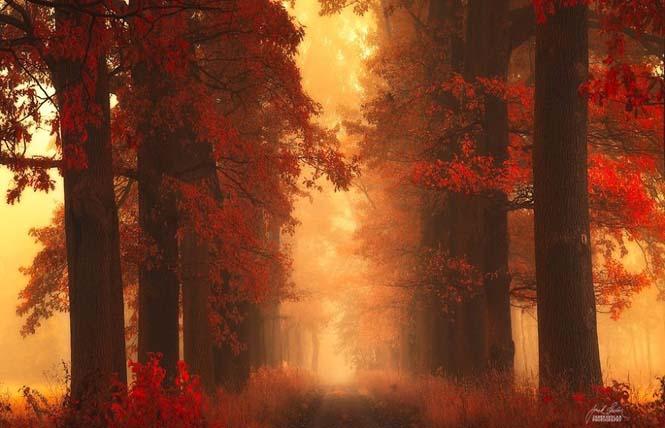 20 εκπληκτικές φωτογραφίες φθινοπωρινών δασών από τον Janek Sedlar (11)