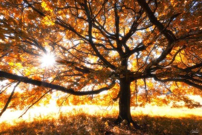 20 εκπληκτικές φωτογραφίες φθινοπωρινών δασών από τον Janek Sedlar (12)