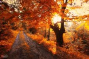 20 εκπληκτικές φωτογραφίες φθινοπωρινών δασών από τον Janek Sedlar (13)