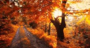 20 εκπληκτικές φωτογραφίες φθινοπωρινών δασών από τον Janek Sedlar