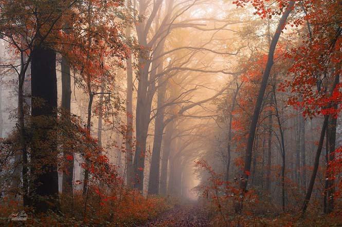 20 εκπληκτικές φωτογραφίες φθινοπωρινών δασών από τον Janek Sedlar (15)