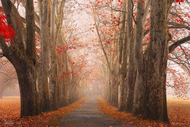 20 εκπληκτικές φωτογραφίες φθινοπωρινών δασών από τον Janek Sedlar (16)