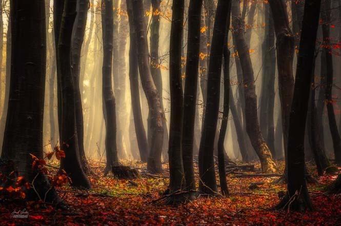 20 εκπληκτικές φωτογραφίες φθινοπωρινών δασών από τον Janek Sedlar (17)