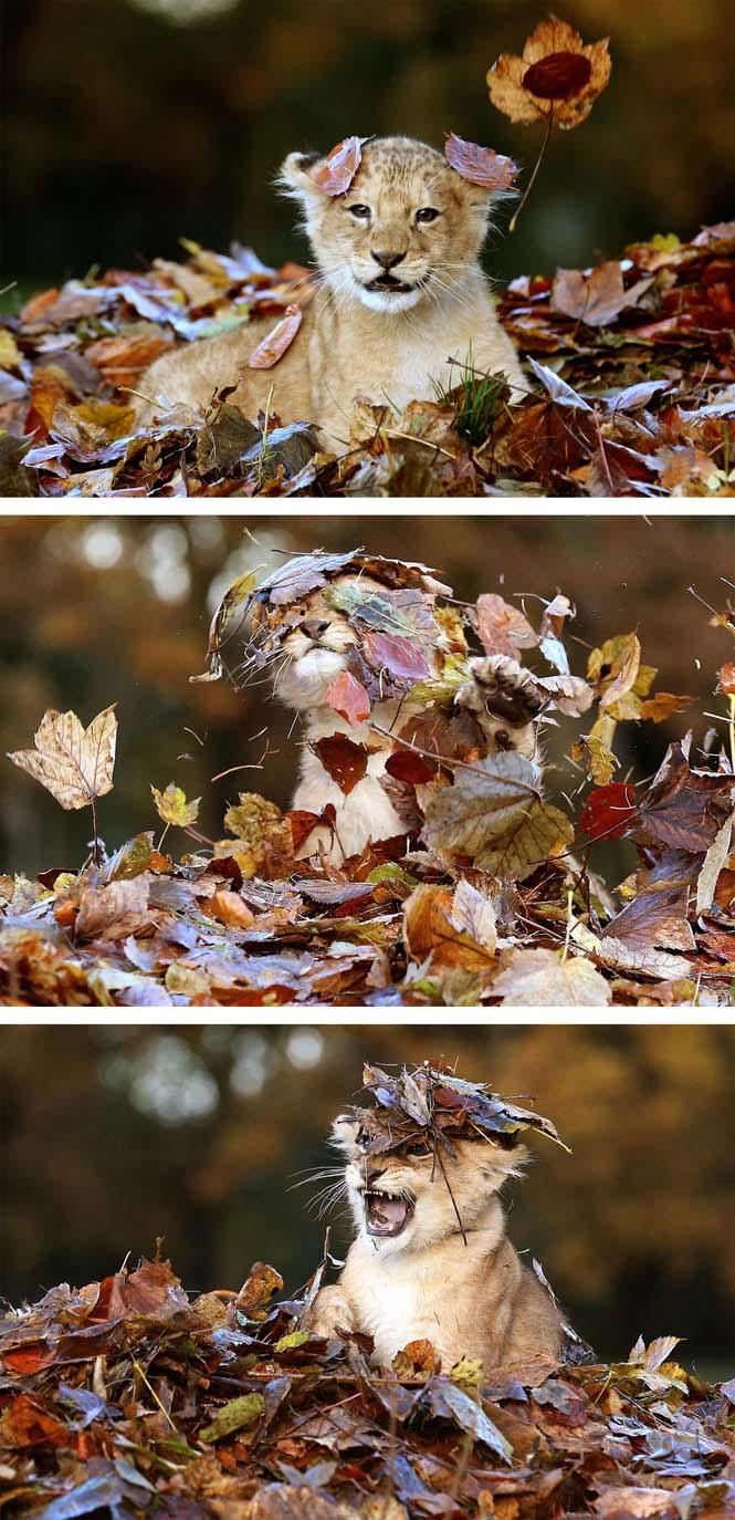 Eκπληκτικές φωτογραφίες ζώων που απολαμβάνουν το Φθινόπωρο (1)