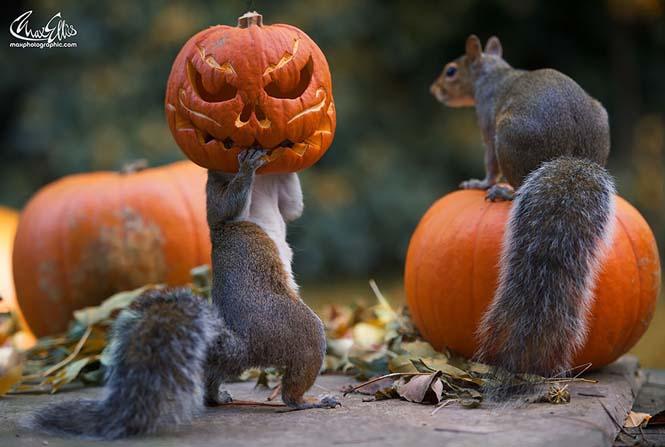 Eκπληκτικές φωτογραφίες ζώων που απολαμβάνουν το Φθινόπωρο (2)