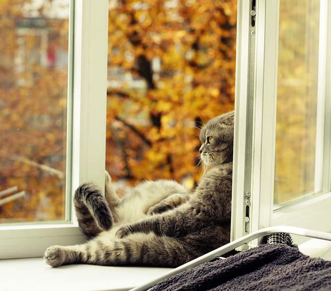 Eκπληκτικές φωτογραφίες ζώων που απολαμβάνουν το Φθινόπωρο (3)