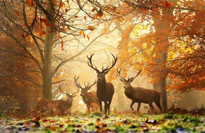 Eκπληκτικές φωτογραφίες ζώων που απολαμβάνουν το Φθινόπωρο (5)