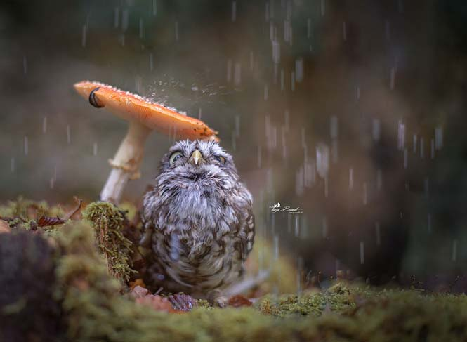 Eκπληκτικές φωτογραφίες ζώων που απολαμβάνουν το Φθινόπωρο (6)