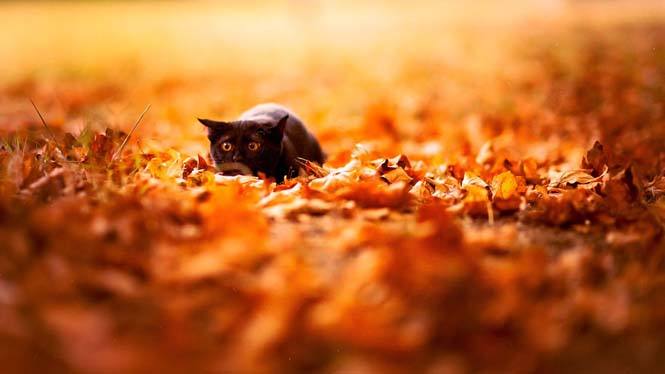 Eκπληκτικές φωτογραφίες ζώων που απολαμβάνουν το Φθινόπωρο (7)