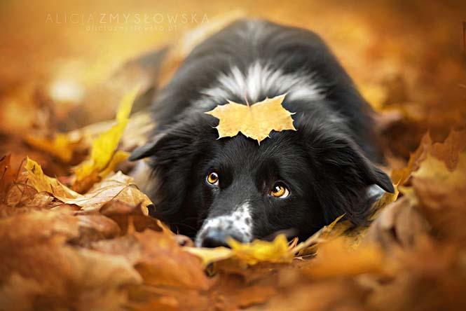 Eκπληκτικές φωτογραφίες ζώων που απολαμβάνουν το Φθινόπωρο (8)