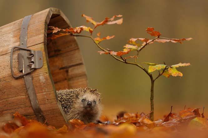 Eκπληκτικές φωτογραφίες ζώων που απολαμβάνουν το Φθινόπωρο (9)