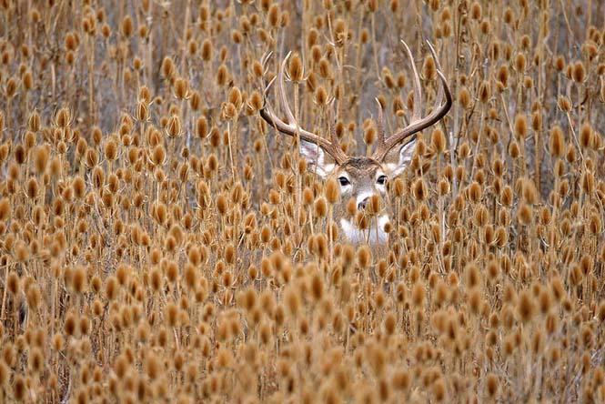 Eκπληκτικές φωτογραφίες ζώων που απολαμβάνουν το Φθινόπωρο (10)