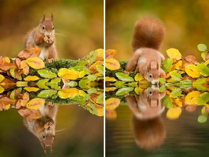 Eκπληκτικές φωτογραφίες ζώων που απολαμβάνουν το Φθινόπωρο (11)