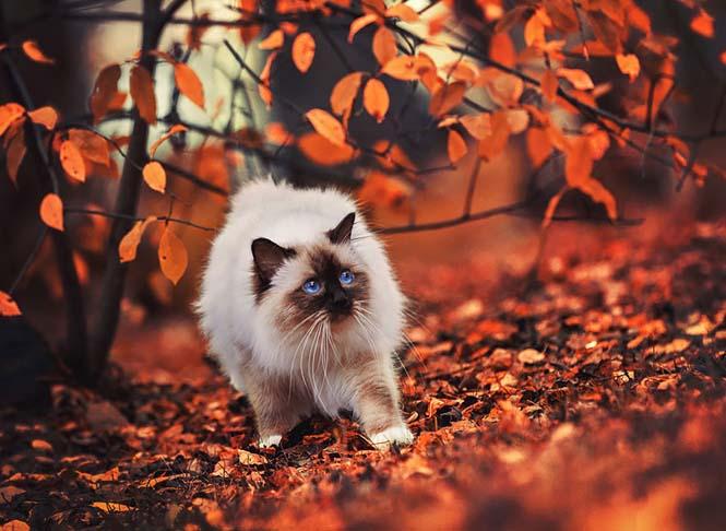 Eκπληκτικές φωτογραφίες ζώων που απολαμβάνουν το Φθινόπωρο (12)