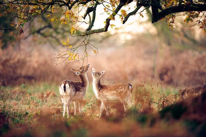 Eκπληκτικές φωτογραφίες ζώων που απολαμβάνουν το Φθινόπωρο (13)