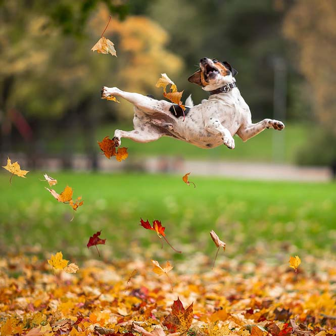 Eκπληκτικές φωτογραφίες ζώων που απολαμβάνουν το Φθινόπωρο (15)