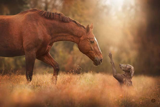 Eκπληκτικές φωτογραφίες ζώων που απολαμβάνουν το Φθινόπωρο (16)