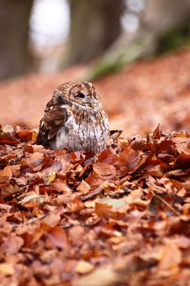 Eκπληκτικές φωτογραφίες ζώων που απολαμβάνουν το Φθινόπωρο (17)
