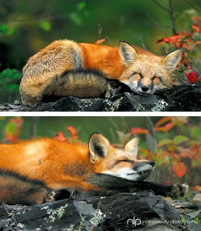 Eκπληκτικές φωτογραφίες ζώων που απολαμβάνουν το Φθινόπωρο (18)
