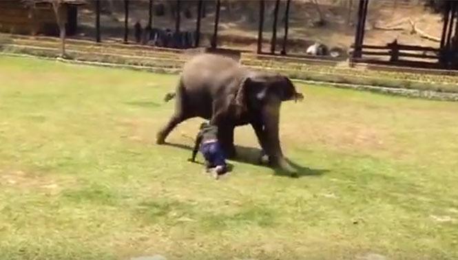 Ελέφαντας έρχεται σε διάσωση ανθρώπου